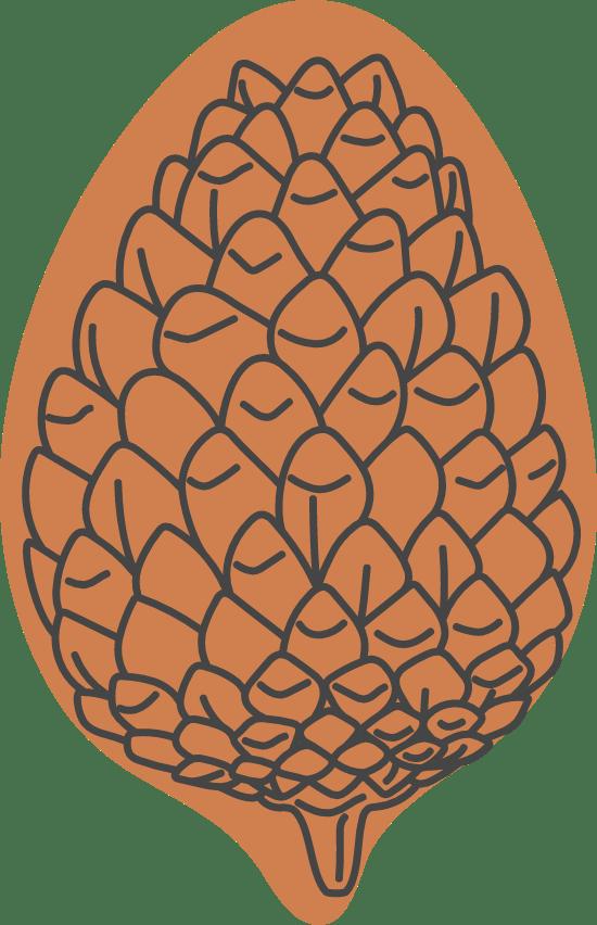 Autumn Closed Pine Cone