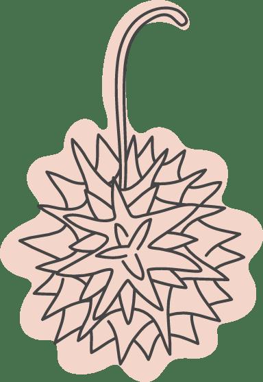 Autumn Spiky Pod