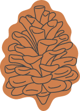 Autumn Open Pine Cone