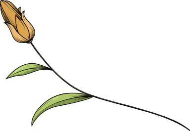 Cut Tulip