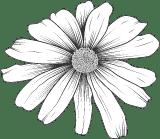 Rustic Daisy 02