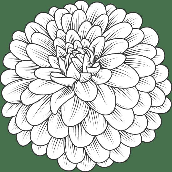 Dahlia Blossom 02