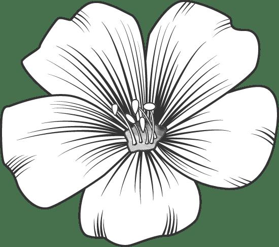 Tropical Blossom 02