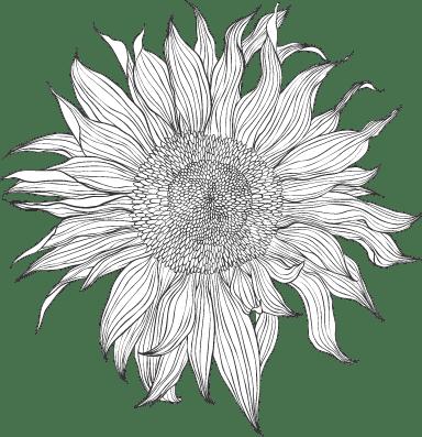 Ragged Sunflower 02