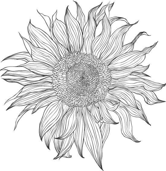 Ragged Sunflower 02