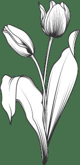 Tulip Pair 02