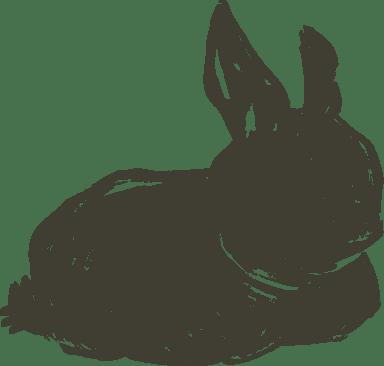 Sitting Shadow Bunny