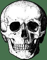 Detailed Skull Front