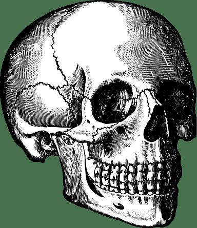 Detailed Skull Angle