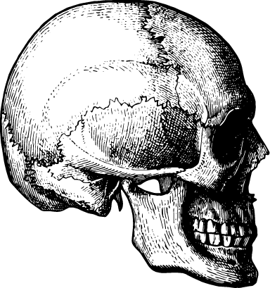 Detailed Skull Side
