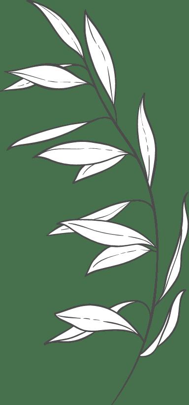 Stemmed Narrow Leaves