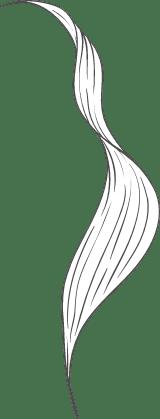 Narrow leaf