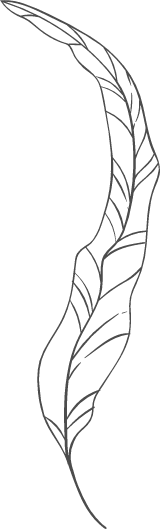 Long Curved Leaf