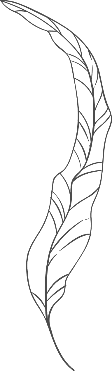 Long Curved Leaf