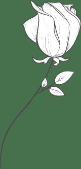 Rosebud On Stem