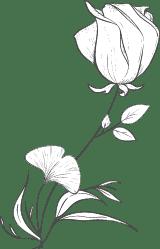 Plain Rose Arrangement