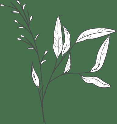 Varied Leaves