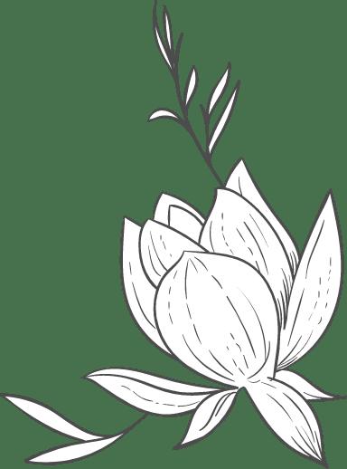 Lotus and Stem