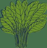 Sketched Lettuce