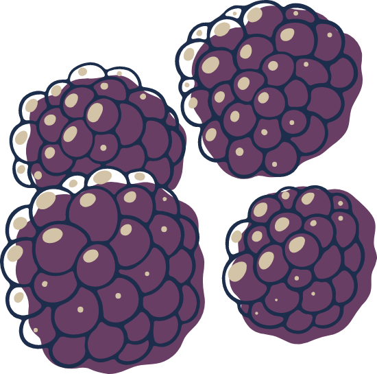 Sketched Blackberries