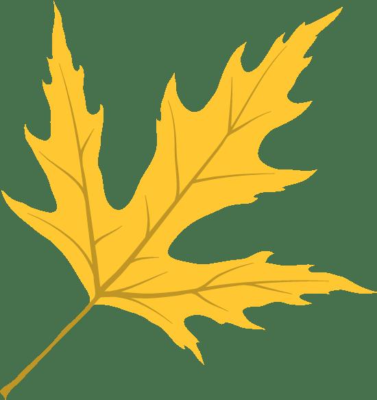 Vivid Maple Leaf