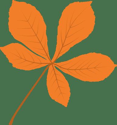 Clear Chestnut Leaf