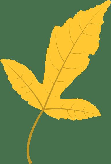 Vivid Sassafras Leaf