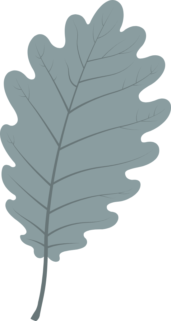 Plain Oak Leaf