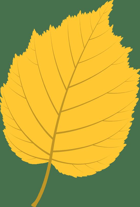Vivid Lime leaf