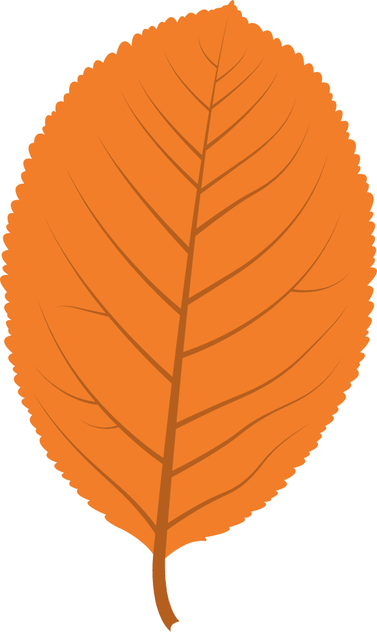 Clear Sallow Leaf