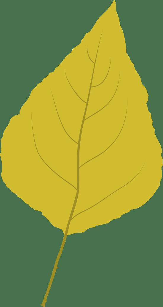 Bright Poplar Leaf