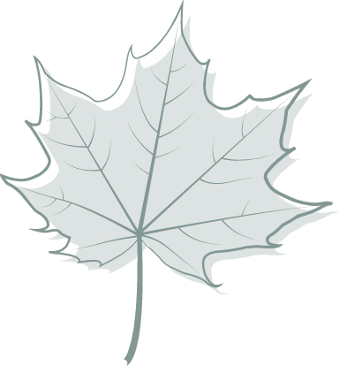 Gray Maple Leaf