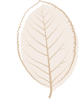 Brown Poplar Leaf