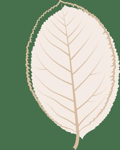 Brown Poplar Leaf