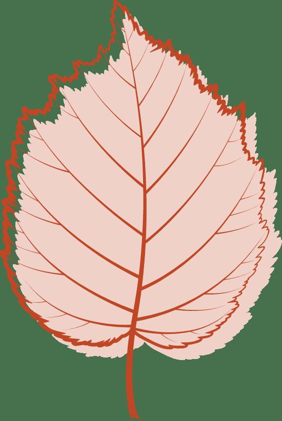Pink Birch Leaf