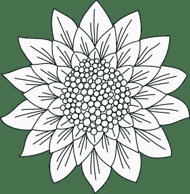 Illustrated Blossom