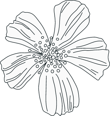 Illustrated Petals
