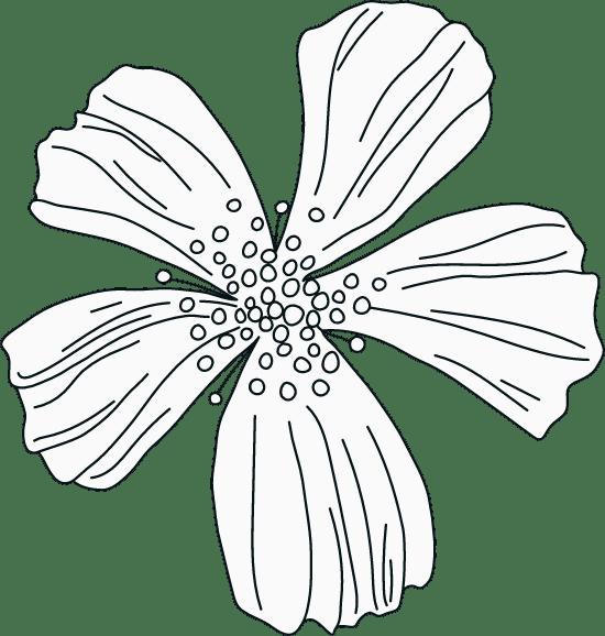 Illustrated Petals