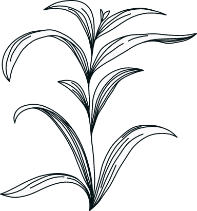 Illustrated Foliage