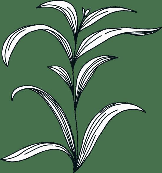 Illustrated Foliage