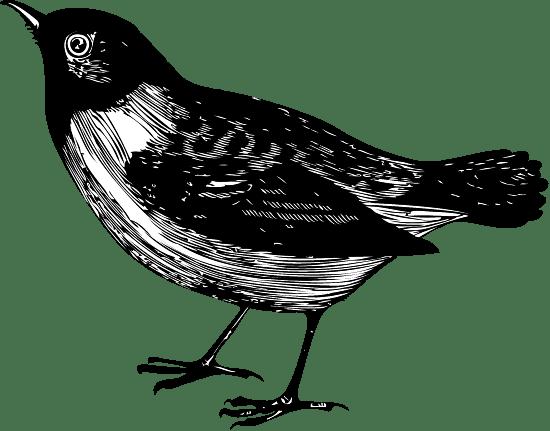 Standing Starling