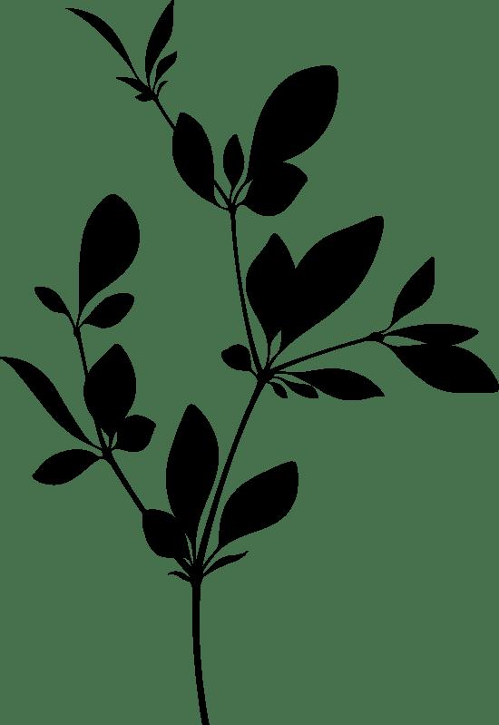 Branching Stem