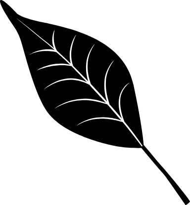 Black Willow Leaf