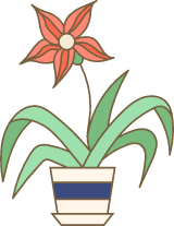 Potted Star Plant