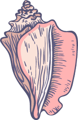 Marine Conch Shell