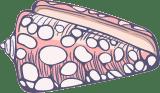 Marine Cone Shell