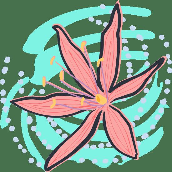 Painted Hyacinth