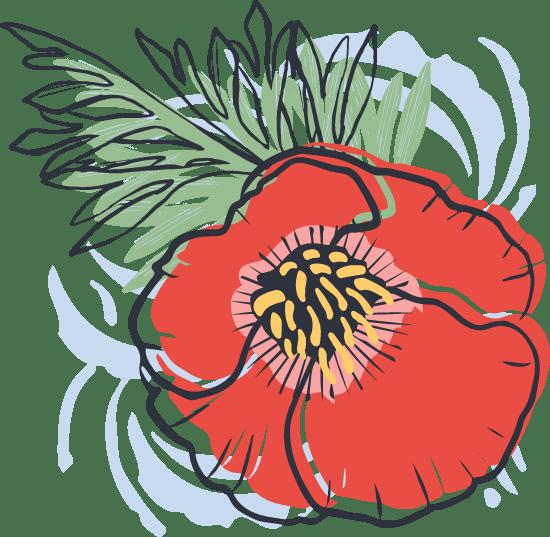 Painted Poppy