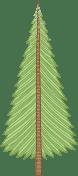 Douglas Tree
