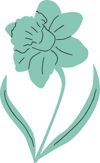 Daffodil Stem